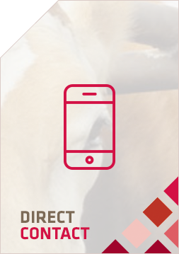 DirectContactBtn